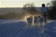 Dog sledding. Photo Terje Rakke, Nordic Life/