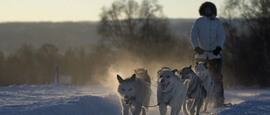 dog sledding terje rakke nordic life in