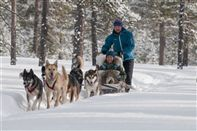 Dog sledge. Photo CH/Innovation Norway