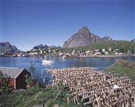 Lofoten Islands & Stockfish. Photo Frithjof Fure/Innovation Norway