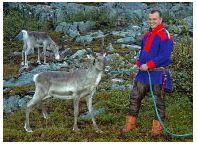 Reindeer. Photo Terje Rakke, Nordic Life/Innovation Norway